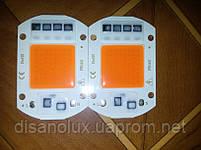 Світлодіодна фіто матриця для рослин LED COB 20вт 230В Full Spectrum, фото 8