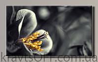 "Картина на холсте "" Цветок 21 '' ( 55х91 см )"