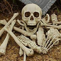 Реалистичный пластиковый скелет человека, кости муляж, набор из 28 деталей, череп и кости декор на хэллоуин