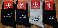 """Чоловічі бавовняні шкарпетки в стилі""""Puma""""40-44, фото 1"""