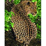 Картина по номерам - Леопард (КНО4101) 40 х 50 см, фото 2