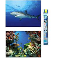 Tetra Shark and Coral двусторонний фон для аквариума 60х45см