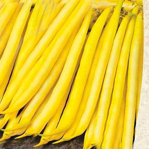 Золота зірка (500г) - Насіння квасолі овочевої, Садиба Центр