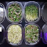 Микрозелень Сет, фото 2