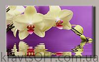 """Картина на холсте """" Белая орхидея '' ( 32.5х55 см )"""