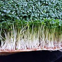 Микрозелень Живая Горчицы, фото 1