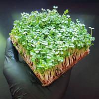 Микрозелень Живая Руккола, фото 1