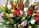 Тюльпан.  Аромавоск, аромамасла, благовония, эфирное масло для аромаламп, фото 4