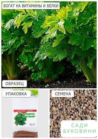 Сельдерей листовой (Зипер) ТМ 'Весна' 0.5г