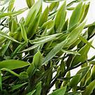 ИКЕА (IKEA) ФЕЙКА, 604.339.39, Искусственное растение в горшке, внутрь / снаружи бамбукового дома, 9 см - ТОП ПРОДАЖ, фото 6
