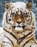 Картина по номерам 40x50 Уссурийский тигр (КНО4140), фото 1