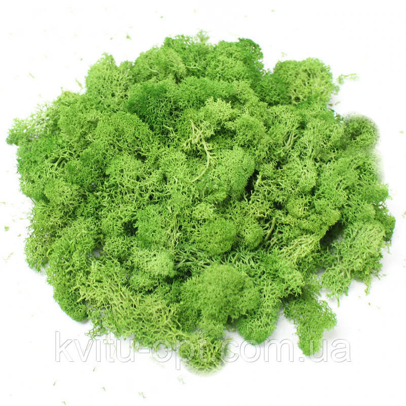 Мох стабилизированный зеленый  85 грамм