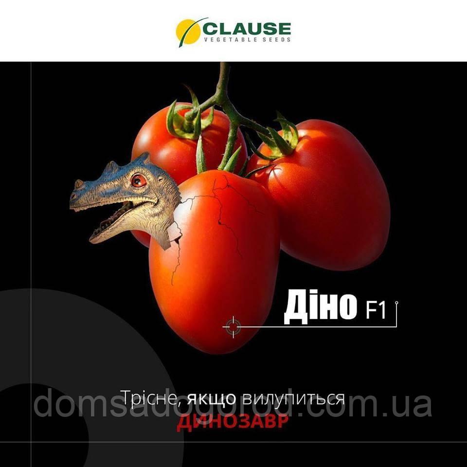 Томат ДИНО F1 | DINO Clause  1000 шт