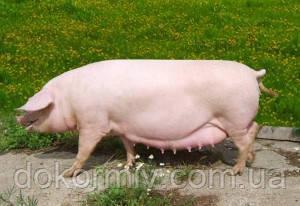Премикс для супоросных свиноматок 1%