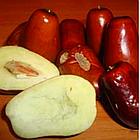 Саженцы Зизифуса Вахшский (привитый) - ранний, среднеплодный, урожайный (унаби, финика, жужуба), фото 3