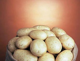 Семена картофеля 1-й репродукции Голандия (Саванна)