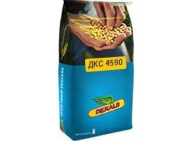 Купить Семена кукурузы ДКС 4590