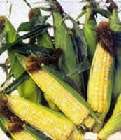 Купить Кукуруза Амели