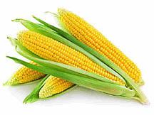 Купить Семена кукурузы Каньйонс