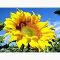 Купить Семена подсолнечника НСХ 26752 OR