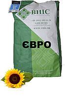 Семена подсолнуха Евро под Евро Лайтнинг / Насіння  соняшнику Евро
