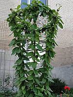 Опора для растений вертикальная (150 см)