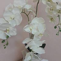 Орхидея фаленопсис 85 см, фото 1