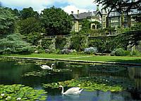 Фотообои Prestige Лебеди на пруду № 41- 272*196 см
