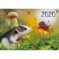 """Настенный квартальный календарь 1 пружина 2020 год """"Крыса, улитка"""""""