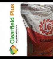Семена подсолнечника ЛГ 5555 КЛП Круизер(Лимагрейн)