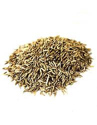 Семена Райграс многолетний