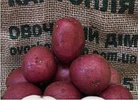 Семена картофеля 1-й репродукции Голландия (Инфинити)