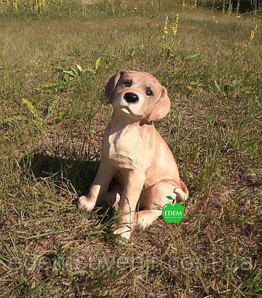 Садовая фигура собака щенок Лабрадора, фото 2
