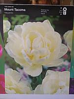 Тюльпан  махровый,пионовидный, поздневесеннего срока цветения Mount Tacoma, высота 45 см , Голландия