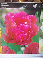 Тюльпан  махровый, пионовидный, ранневесеннего срока цветения Margarita, высота 50 см, Голландия
