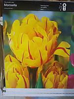 Тюльпан махровый ,пионовидный, ранневесеннего срока цветения Monsella, высота 30 см, Голландия