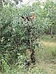 Костюм детский Киборг для мальчиков цвет камуфляж A-TACS копия военного костюма, фото 2