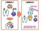 Kiss You Змінна насадка для іонної зубної щітки з ультратонкої м'якою щетиною, 2 шт в упаковці, фото 3