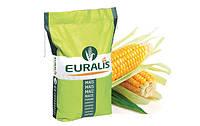 ЕС Сенсор Семена кукурузы Евралис Семанс, насіння кукурудзи