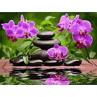 "Картина по номерам ""Лиловые орхидеи"" на холсте 40Х50см Babylon VP535"