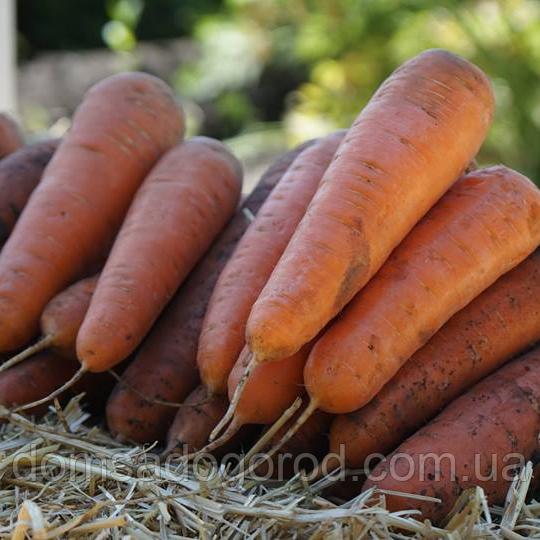 Морковь САТУРНО F1 Clause | SATYRNO 100000 шт