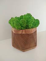 Кашпо з мохом (ягель), фото 1