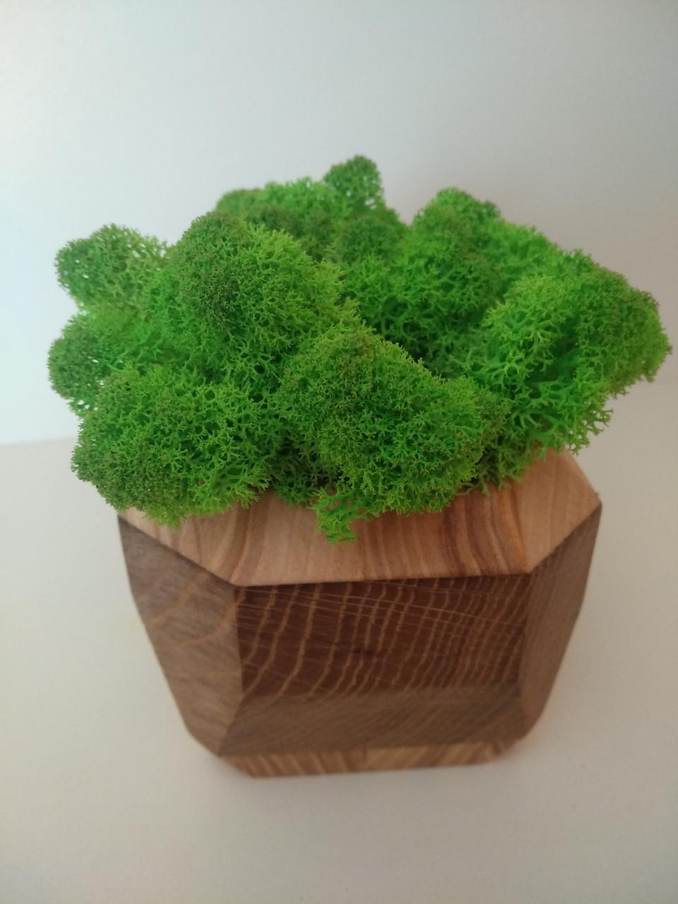 Кашпо зі стабілізованим мохом (ягель)