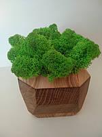 Кашпо зі стабілізованим мохом (ягель), фото 1