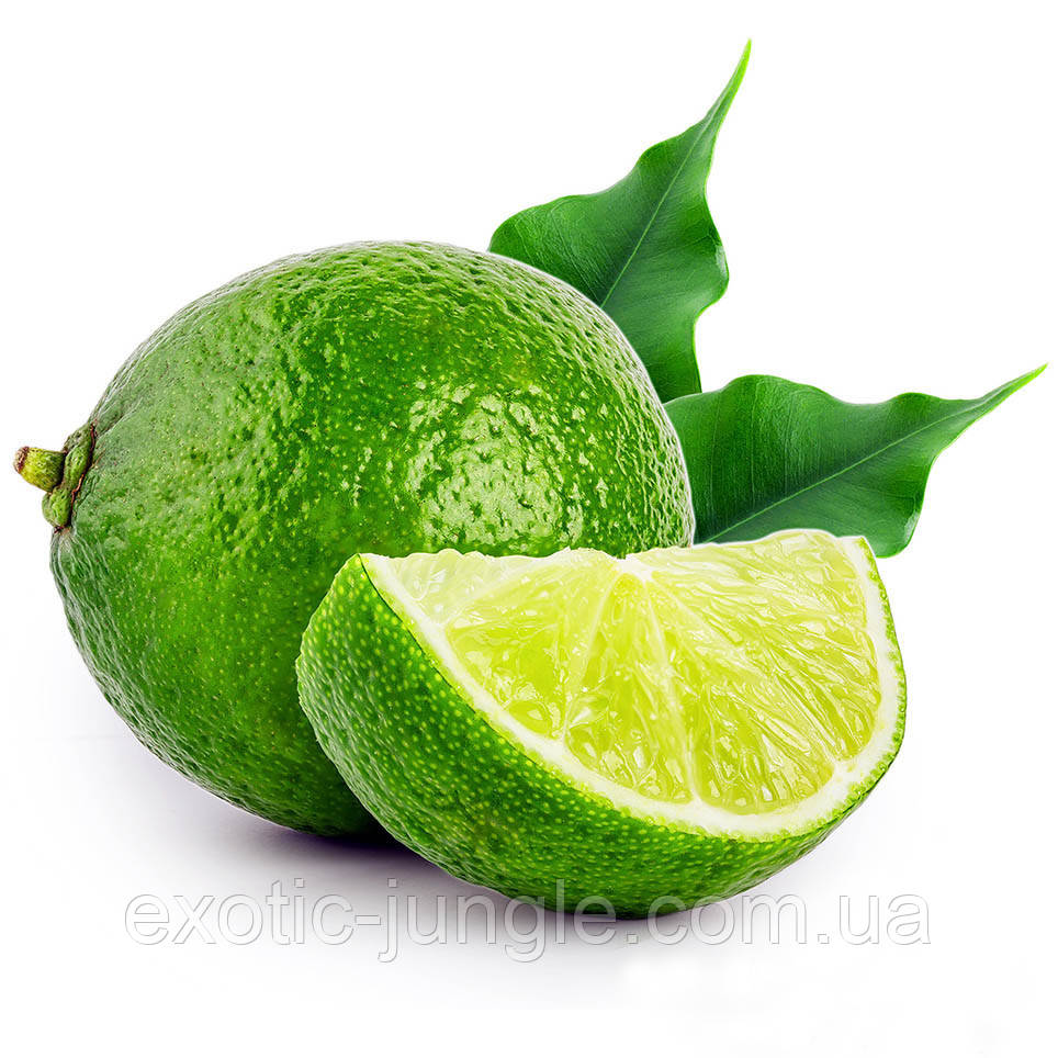 Мексиканский лайм (aurantifolia Messicana / West Indian lime.) 20-25 см. Комнатный