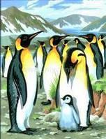 Рисование картин по цифрам Пингвины Sequin Art SA0033