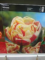 Тюльпан махровый,пионовидный, поздневесеннего срока цветения Wirosa , высота 30 см, Голландия
