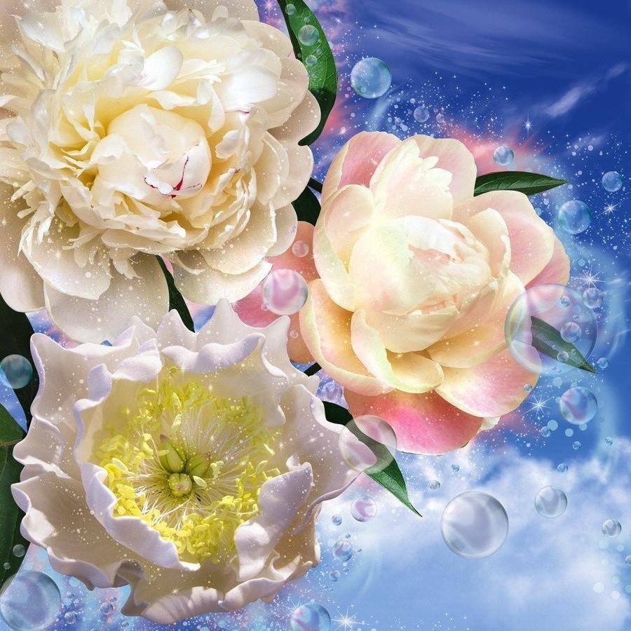 Фотообои, цвети,  Пионы,  12 листов, размер 210х196 см