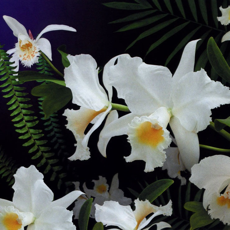 Фотообои, цветы,  Дикая орхидея, 16 листов, размер 194х268 см