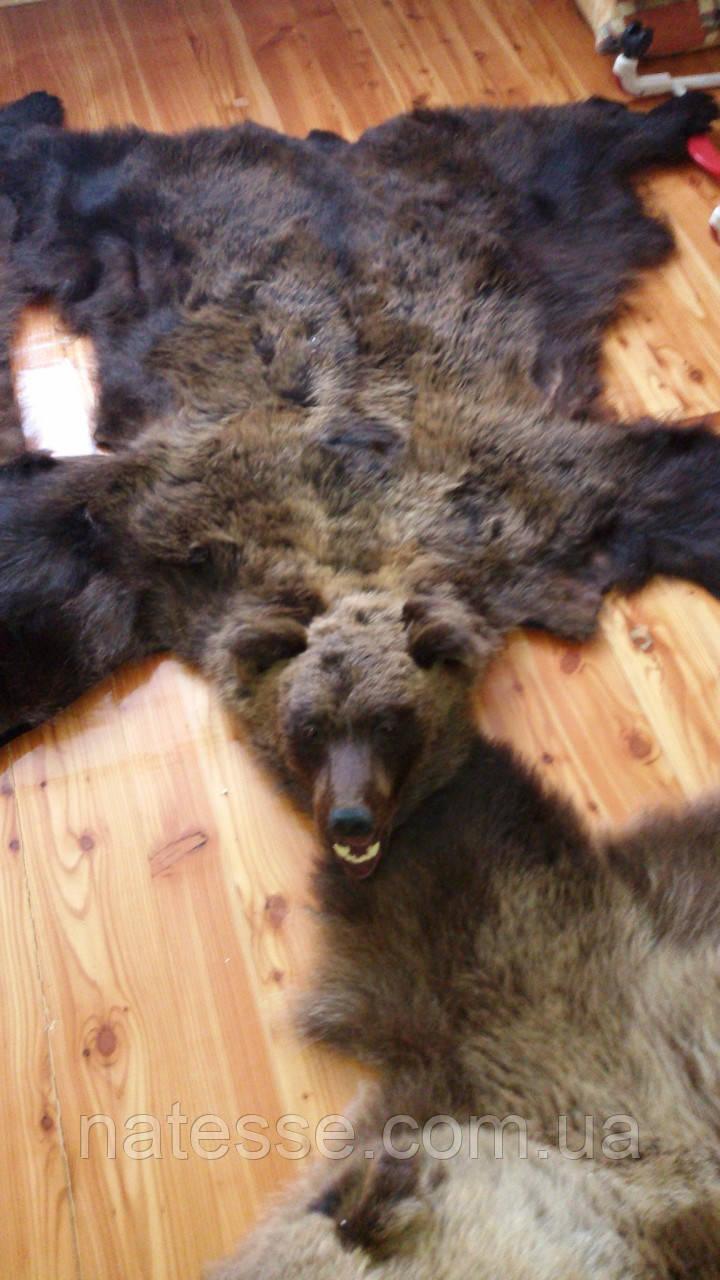 Шкура медведя с головой и лапами